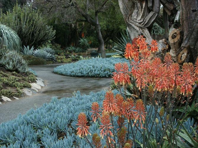 Huntington Desert Garden ??? Canvas for Colorful Cacti