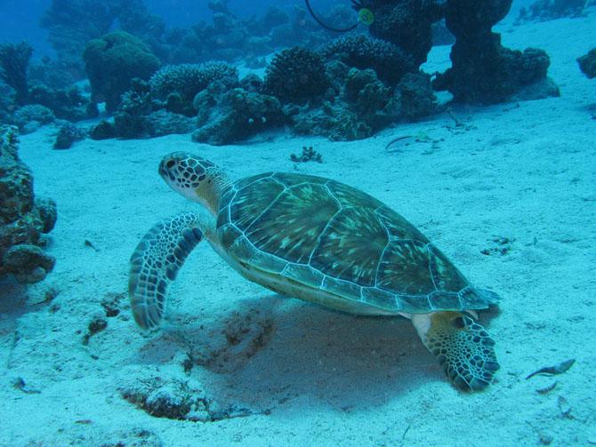 Barracuda Point A Spectacular Diving Adventure Awaits 3