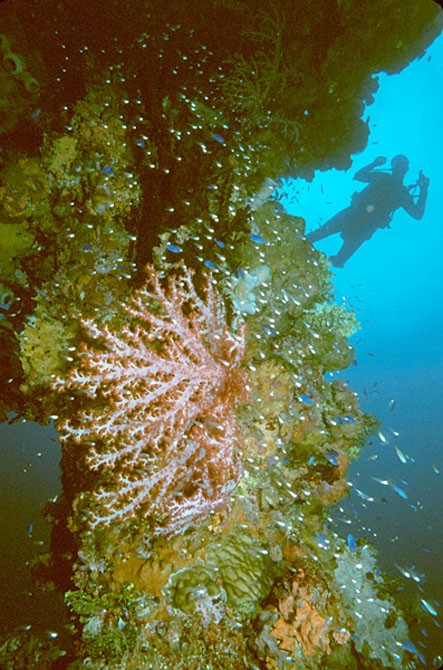 Diving Chuuk Lagoon Discovering Underwater Spectacles 3