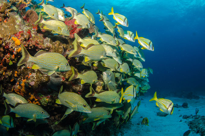 Diving in Cozumel A Fascinating Underwater Adventure 2