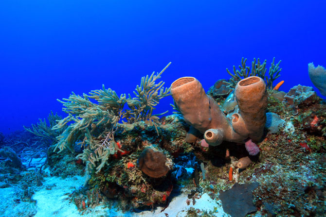 Diving in Cozumel A Fascinating Underwater Adventure 3