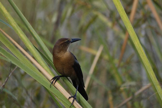 Everglades An Escape into Natures Wonderland 3