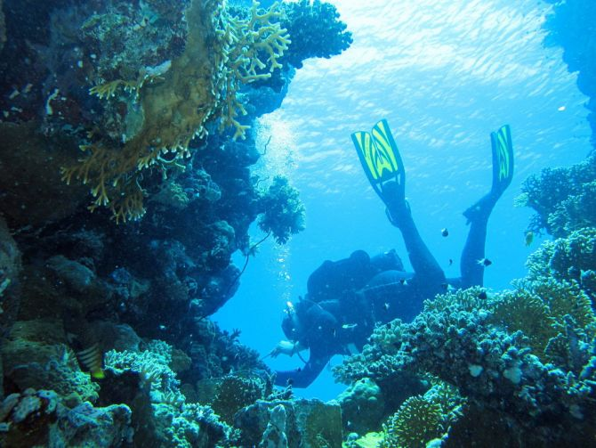 Top 5 Dive Sites in Africa Egypt