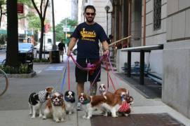 Glamorous pups of New York.