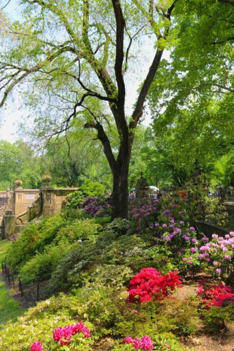 Bethesda Fountain gardens in Central Park
