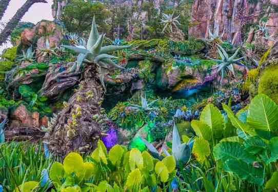 Disney Animal Kingdom Pandora