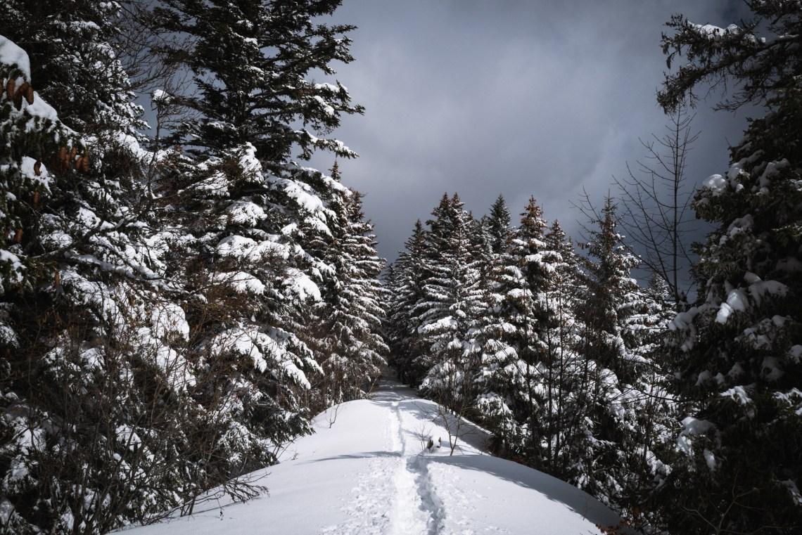 Chartreuse forêt neige
