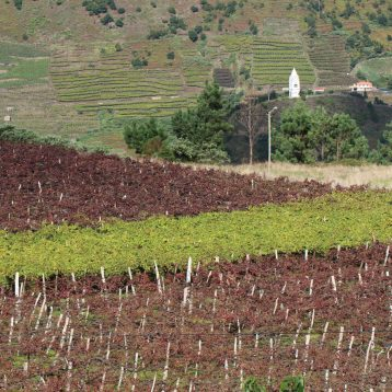 Madeira wine tours or Madeira winery tours or Madeira vineyard tours are a great way to know Madeira famous wine.