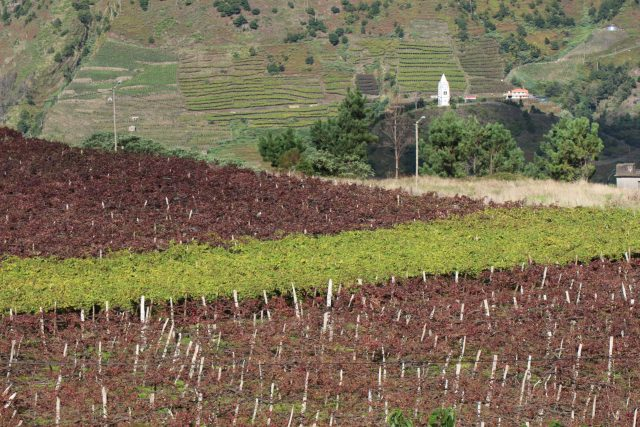 where does madeira wine come from? It comes from Madeira Island Portugal. On our madeira wine tour we visit the vineyards and interect with madeira wine producers.