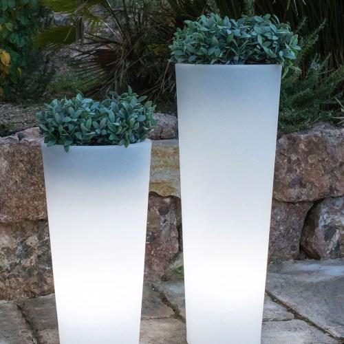 new garden ficus plant pots 3