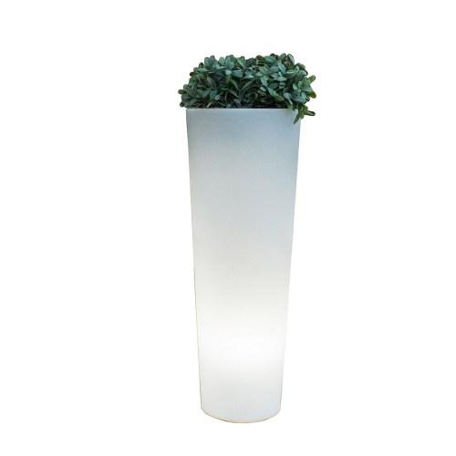 new garden ficus plant pots 4