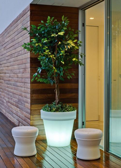 new garden magnolia plant pot 10