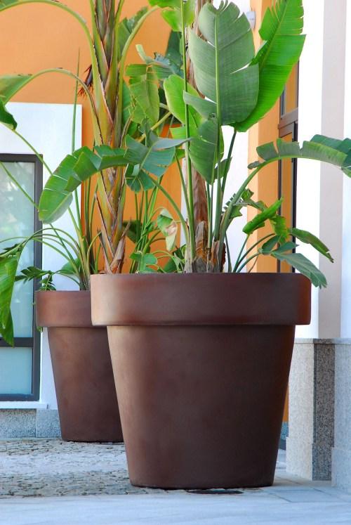 new garden magnolia plant pot 21