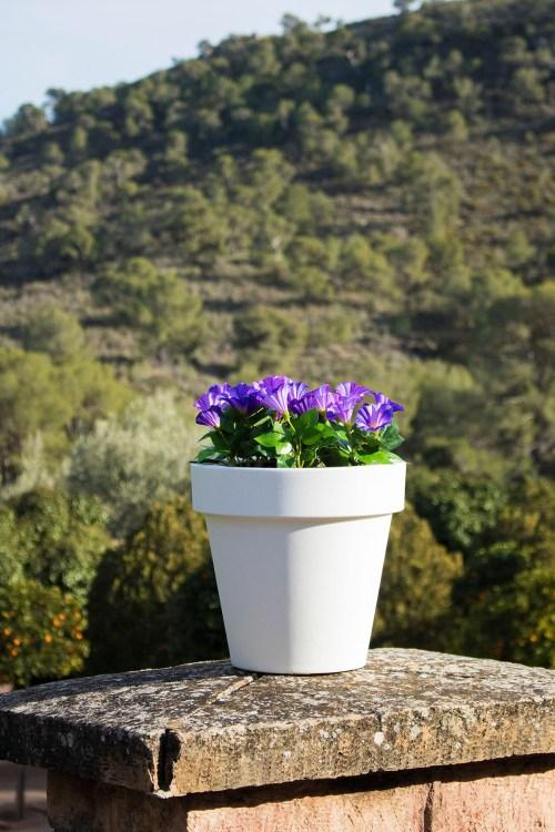 new garden magnolia plant pot 31
