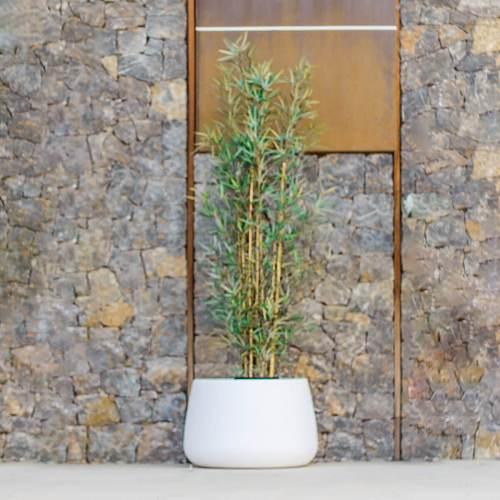 camelia 60 plant pot 2