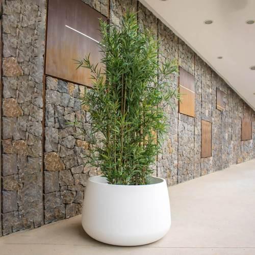 camelia 80 plant pot 1