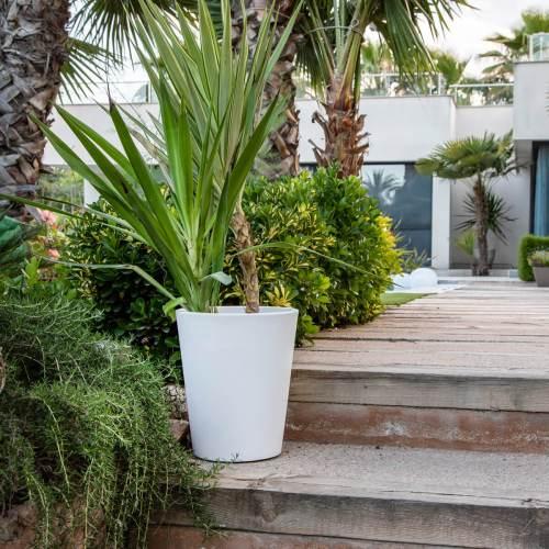 gerbera 45 plant pot 2