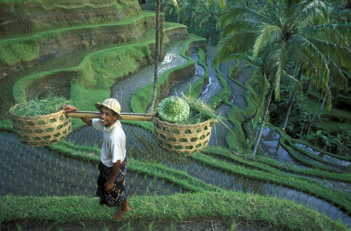 Ubud Rice Terrace 2