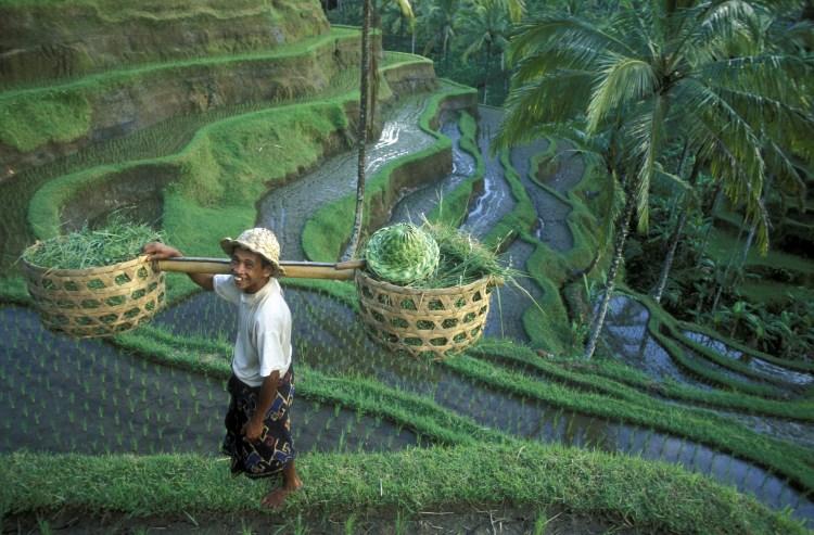 Ubud Rice Terrace 2