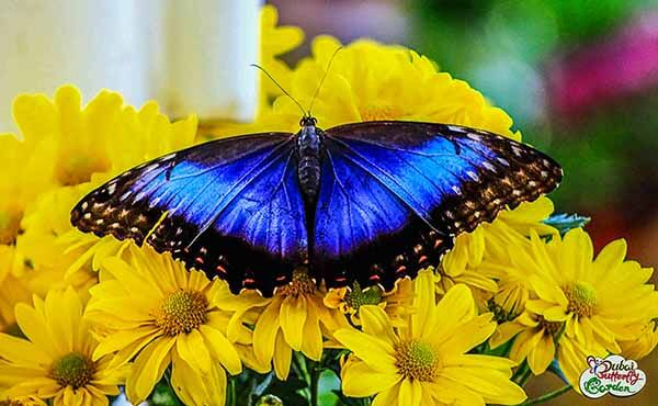 Dubai Butterfly Garden - Luxuria Tours & Events