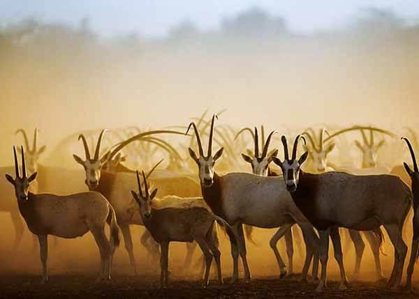 Sir Bani Yas Wild Life - Luxuria Tours & Events