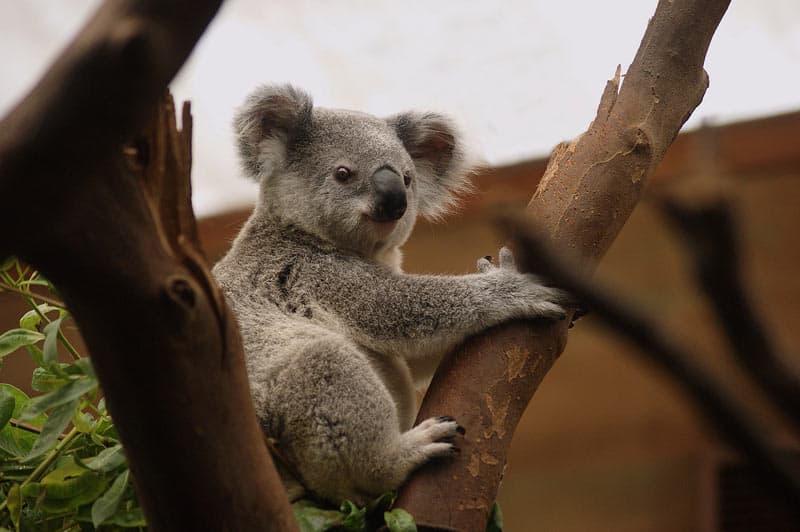 australia-travel-tips