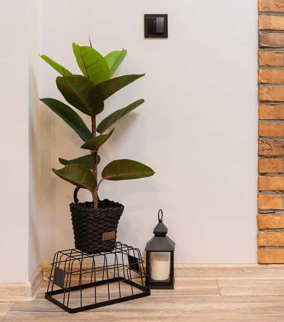 luxury-plants-guide