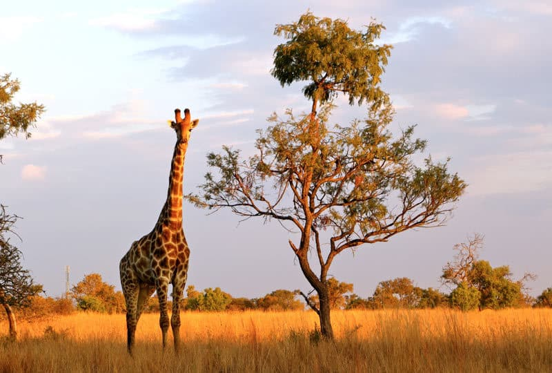 south-africa-trip