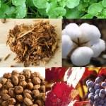 sisley-ingredients