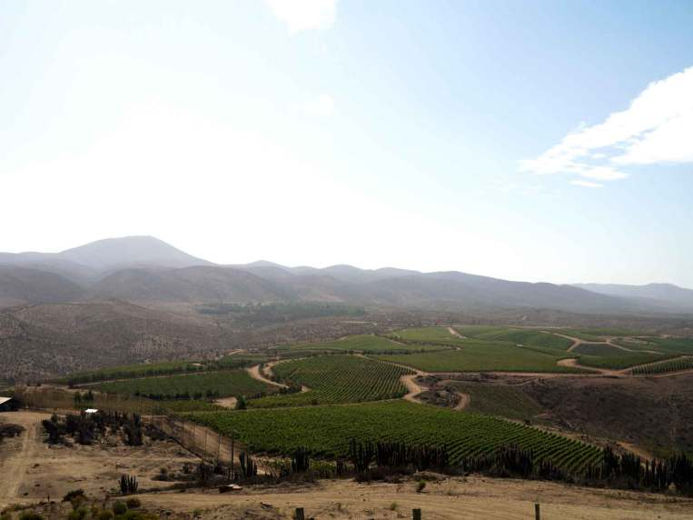 Tabalís terroir skifter alt efter placering tæt på hav eller ørken, ligesom bjergene er med til at give ideelle betingelser for de forskellige druer.
