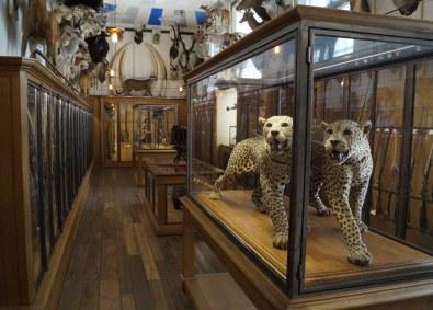 Museet har en fin samling af trofæer, men de er langt fra det centrale, hvilket er særdeles opfriskende.
