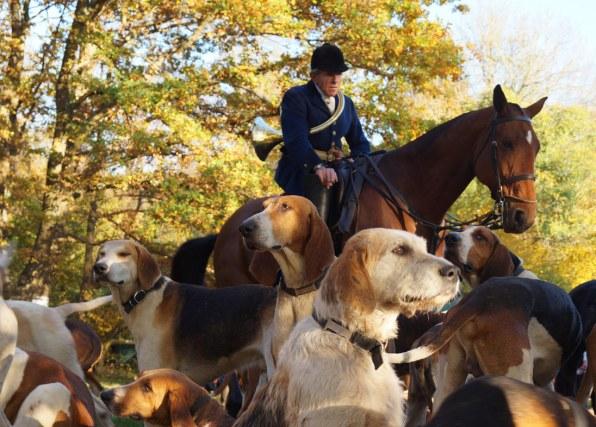 I Drachs hundekobbel er der tre racer, nemlig francais tricolore, English foxhound og anglo-francais tricolore — samt et par bastarder.