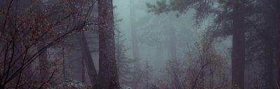 sasquatch challenge dark forest