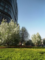 angela-asia-beijing-travel-blog-spring-flowers-in-bloom-6