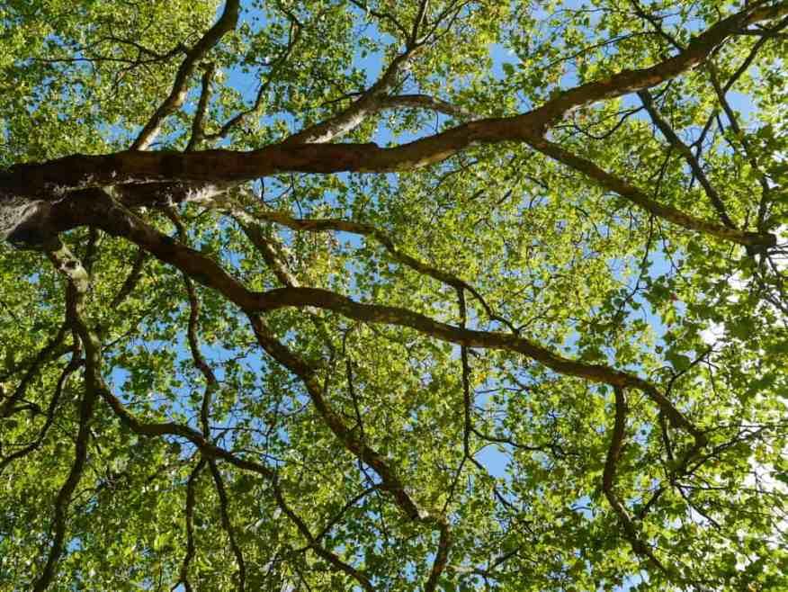 Green Park London picnic