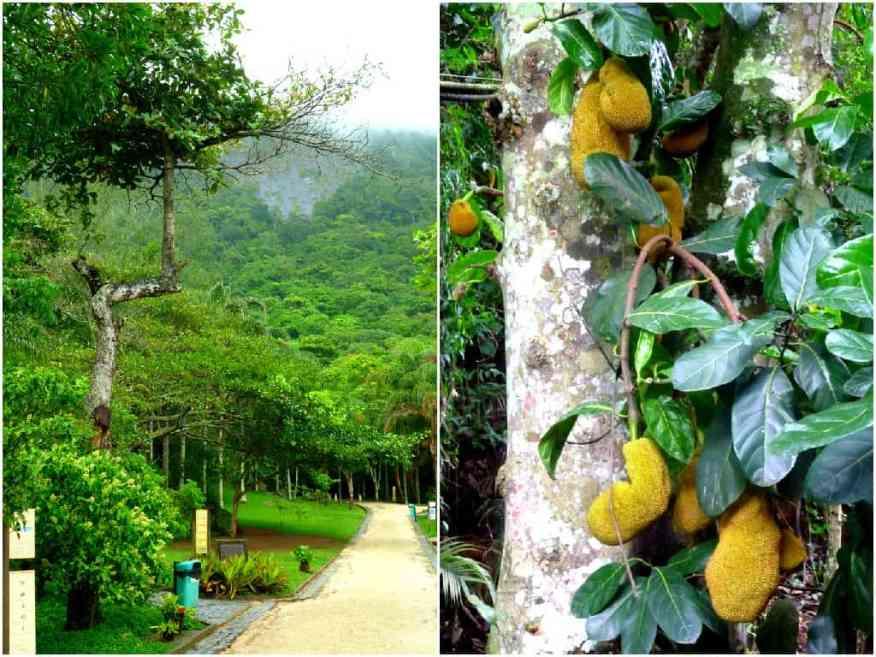 Rio rain forest walk