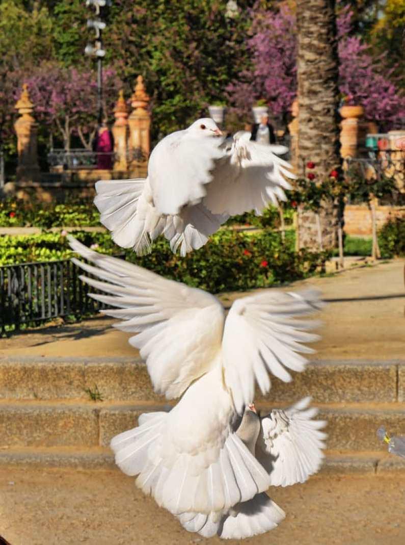Seville photo tour review