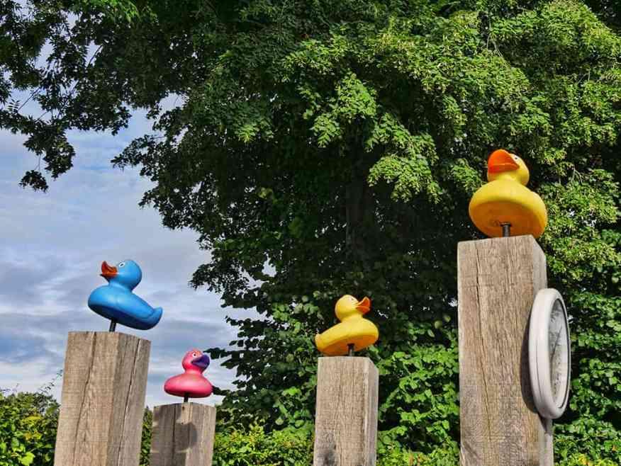 runnymede_hotel_ducks