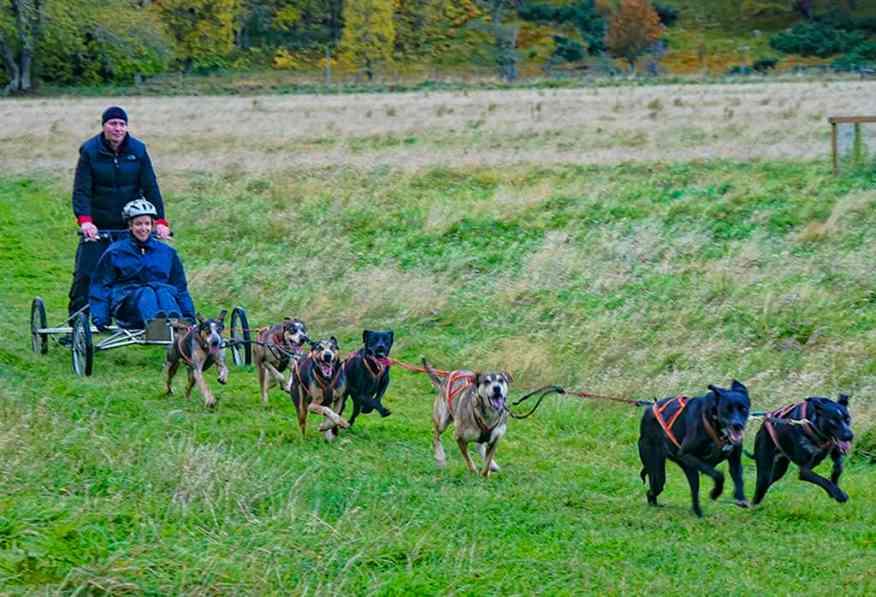 dog_sledding_scottish_highlands