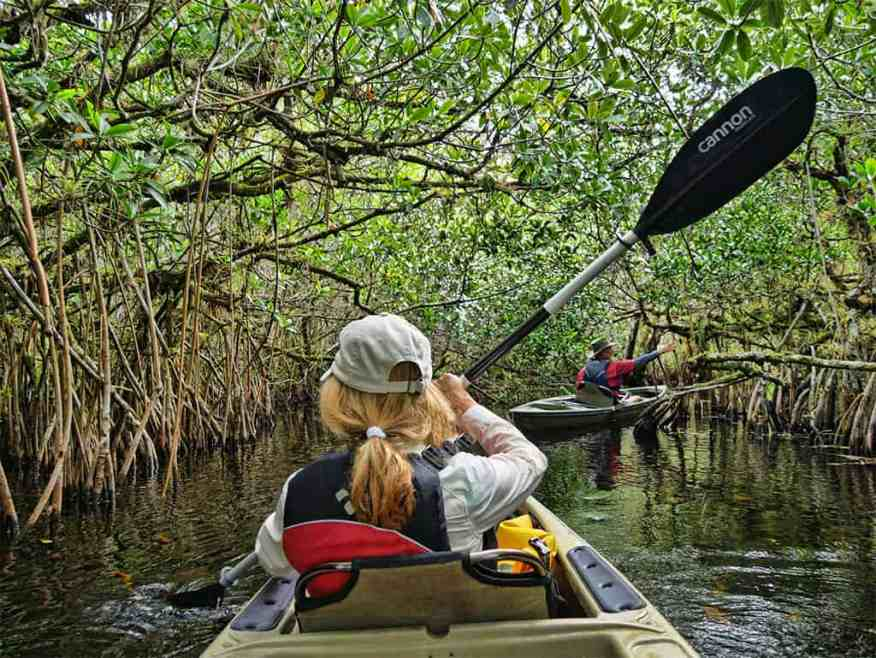 everglades-alligator-kayak-tour-review