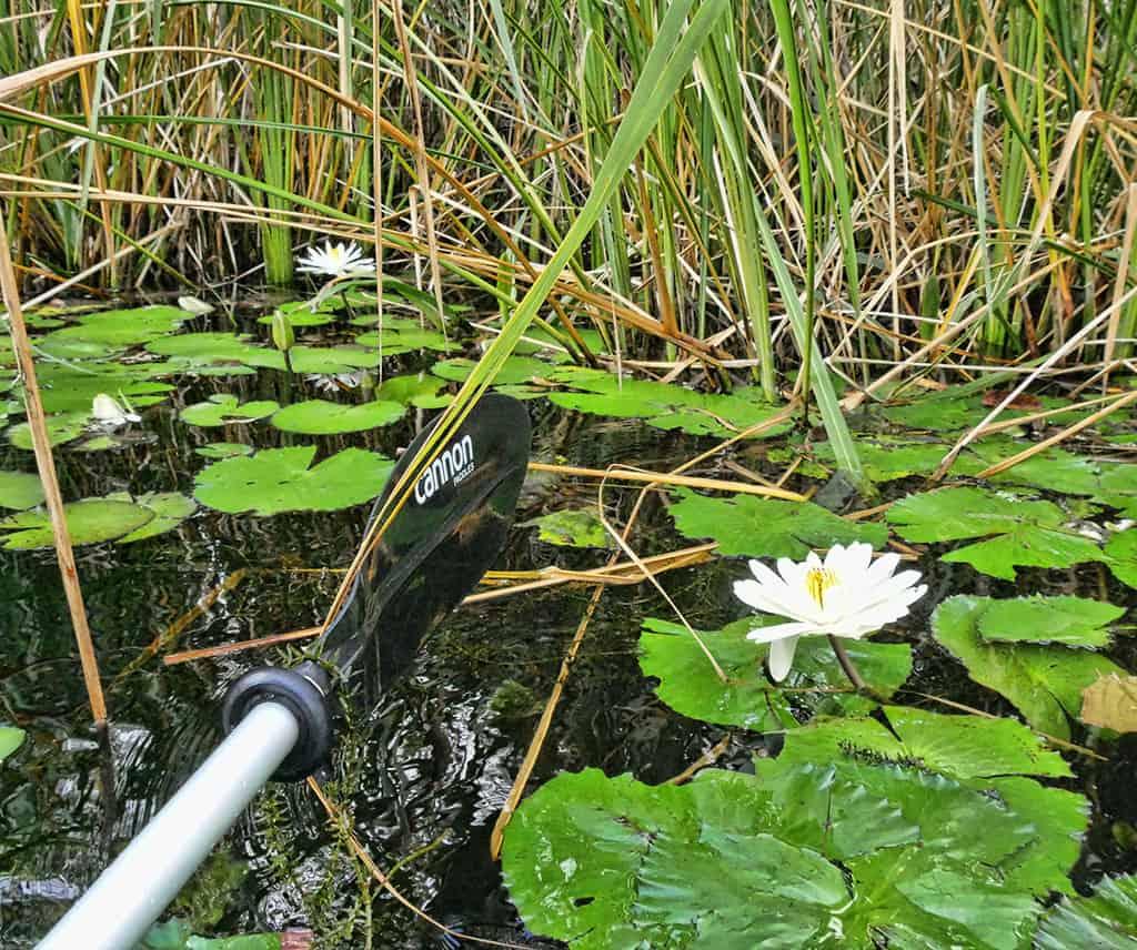 everglades-area-tour-waterlily