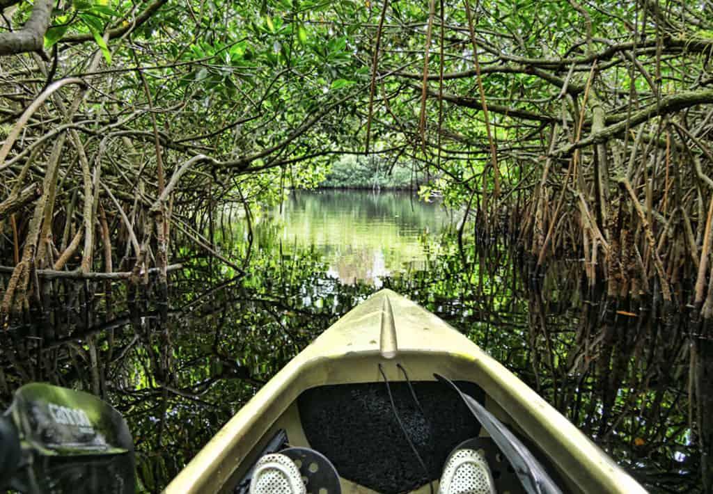mangrove-florida-trip