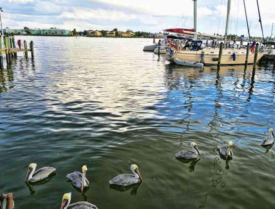 pelicans_naples_dock