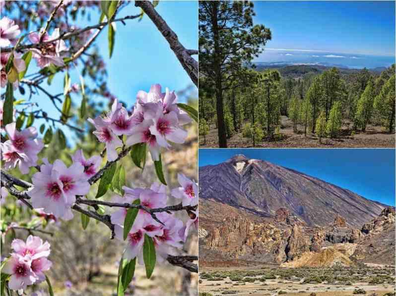Mount Teide landscape