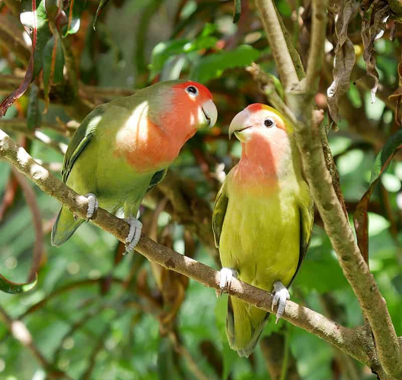 Tropical birds in Jamaica
