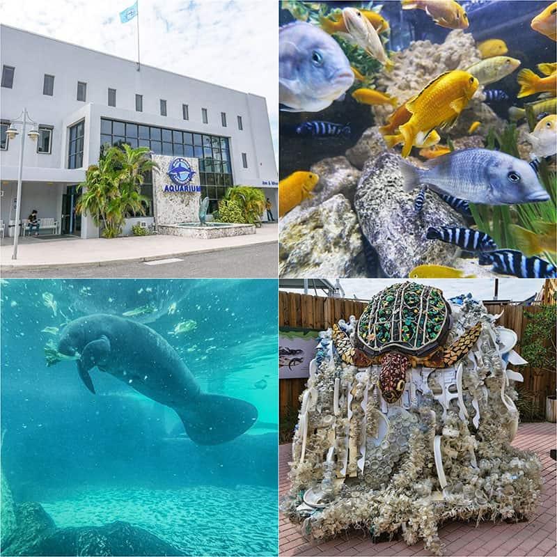 15 Unmissable Sarasota Attractions
