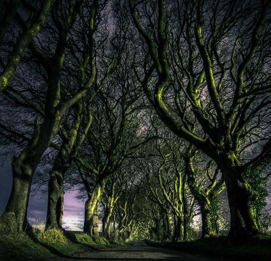 7. The Dark Hedges / County Antrim, Northern Ireland