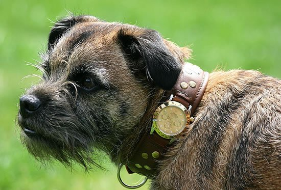 Most Expensive Dog World