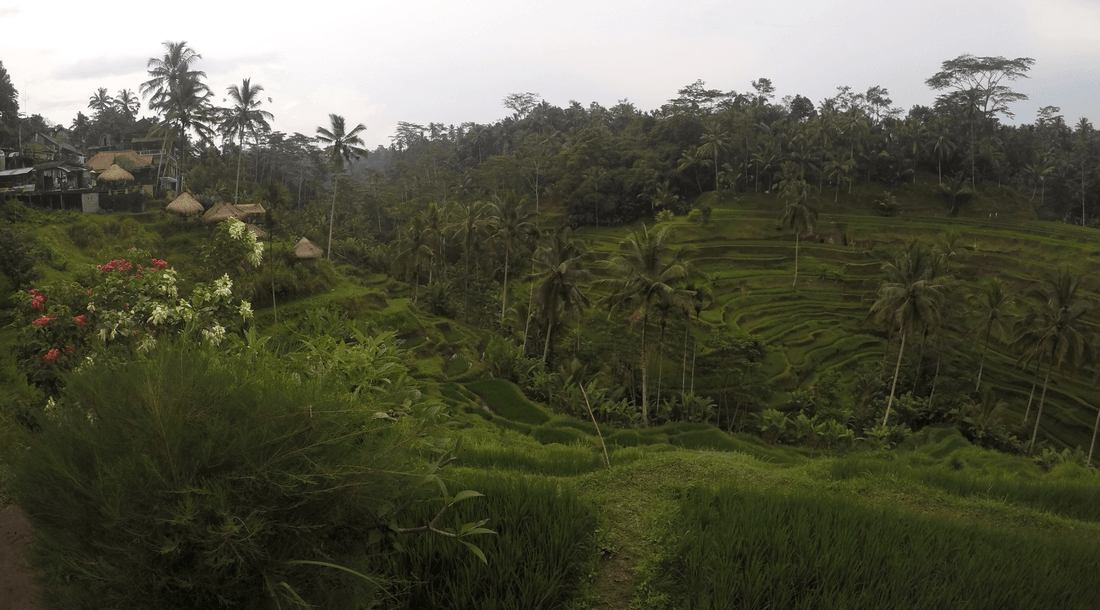 tegalalang-rice-terrace-the-traveller-s-guide-by-ljojlo_orig