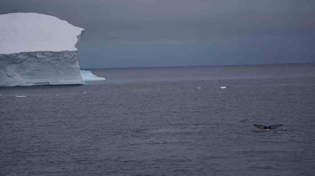 Why I Hated Antarctica - Disruption Of The Peace - The Traveller's Guide By #ljojlo